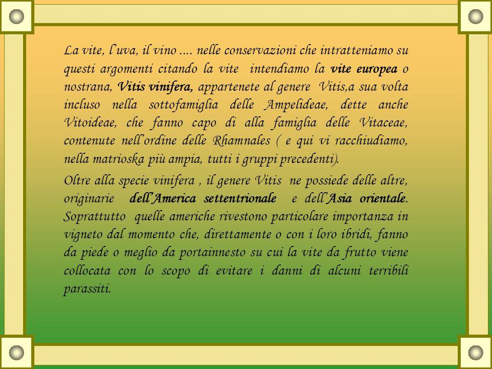 La vite, luva, il vino.... nelle conservazioni che intratteniamo su questi argomenti citando la vite intendiamo la vite europea o nostrana, Vitis vini