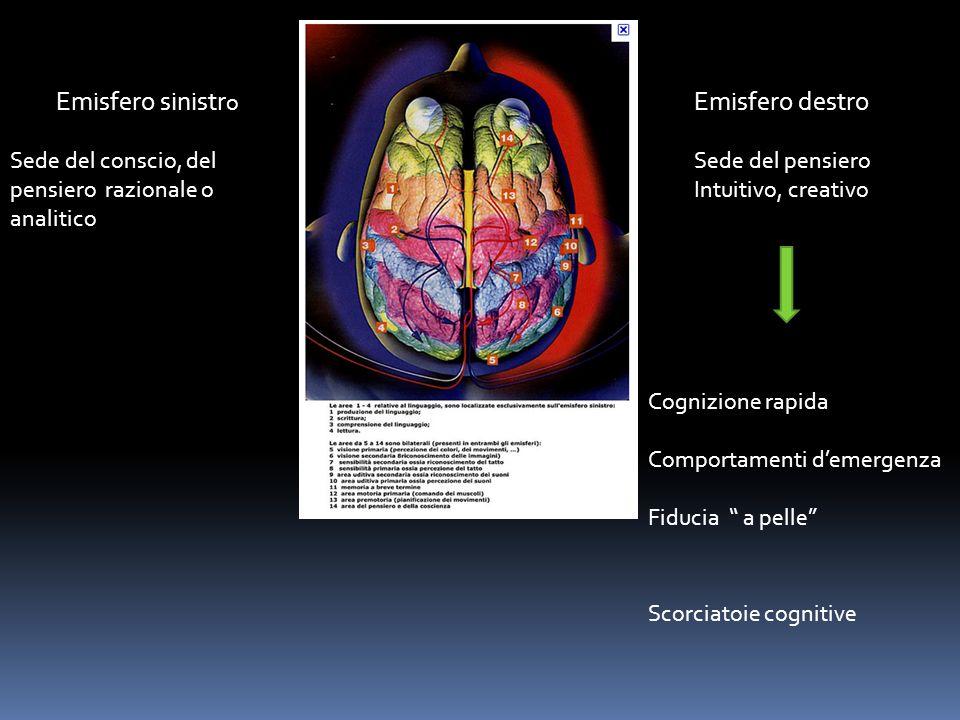 Emisfero sinistr o Sede del conscio, del pensiero razionale o analitico Emisfero destro Sede del pensiero Intuitivo, creativo Cognizione rapida Compor