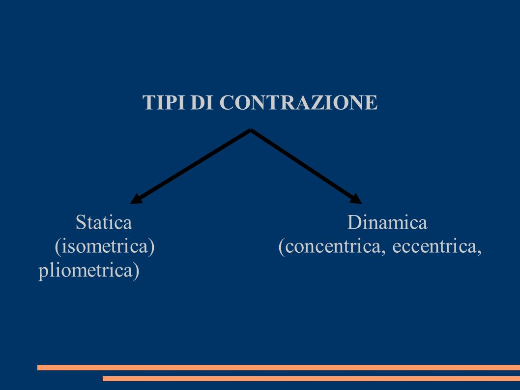 TIPI DI CONTRAZIONE Statica Dinamica (isometrica) (concentrica, eccentrica, pliometrica)