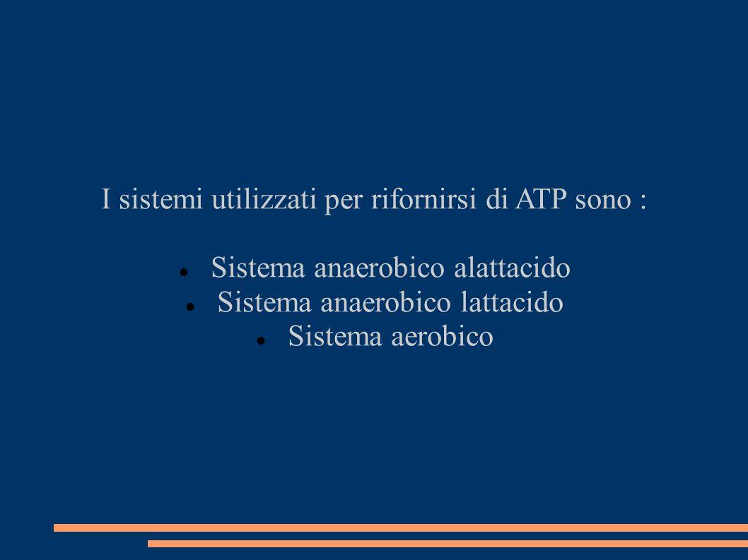 I sistemi utilizzati per rifornirsi di ATP sono : Sistema anaerobico alattacido Sistema anaerobico lattacido Sistema aerobico