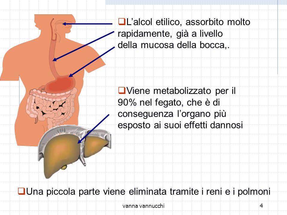 vanna vannucchi4 Lalcol etilico, assorbito molto rapidamente, già a livello della mucosa della bocca,. Una piccola parte viene eliminata tramite i ren