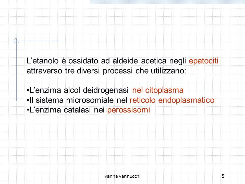 vanna vannucchi5 Letanolo è ossidato ad aldeide acetica negli epatociti attraverso tre diversi processi che utilizzano: Lenzima alcol deidrogenasi nel citoplasma Il sistema microsomiale nel reticolo endoplasmatico Lenzima catalasi nei perossisomi