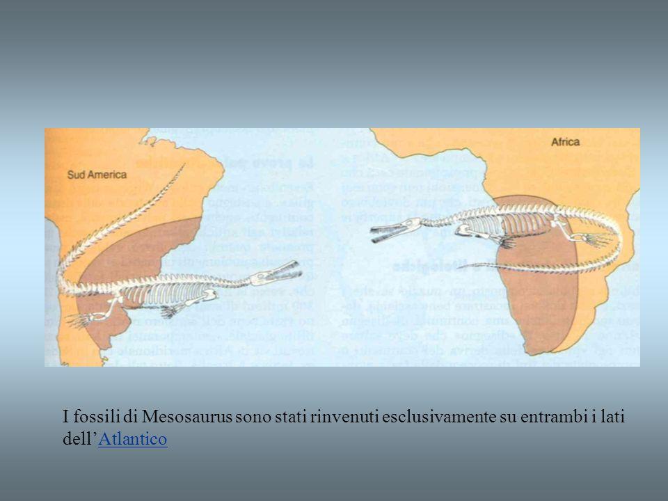 I fossili di Mesosaurus sono stati rinvenuti esclusivamente su entrambi i lati dellAtlanticoAtlantico
