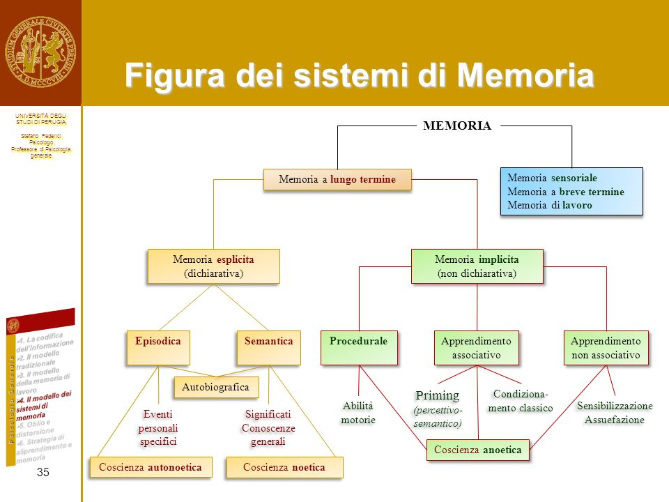 UNIVERSITÀ DEGLI STUDI DI PERUGIA Stefano Federici Psicologo Professore di Psicologia generale UNIVERSITÀ DEGLI STUDI DI PERUGIA Stefano Federici Psicologo Professore di Psicologia generale Figura dei sistemi di Memoria 35 MEMORIA Memoria a lungo termine Memoria sensoriale Memoria a breve termine Memoria di lavoro Memoria sensoriale Memoria a breve termine Memoria di lavoro Memoria esplicita (dichiarativa) Memoria esplicita (dichiarativa) Memoria implicita (non dichiarativa) Memoria implicita (non dichiarativa) Episodica Semantica Procedurale Apprendimento associativo Apprendimento non associativo Eventi personali specifici Significati Conoscenze generali Significati Conoscenze generali Abilità motorie Priming (percettivo- semantico) Condiziona- mento classico Autobiografica Coscienza anoetica Coscienza autonoetica Coscienza noetica Sensibilizzazione Assuefazione Sensibilizzazione Assuefazione