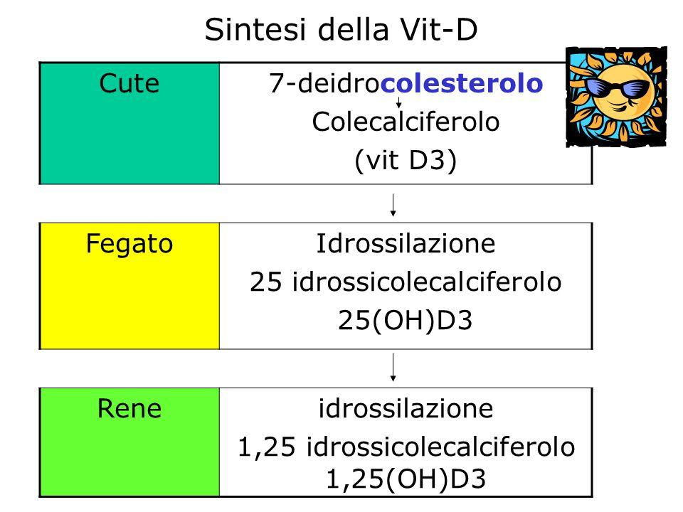 Cute7-deidrocolesterolo Colecalciferolo (vit D3) FegatoIdrossilazione 25 idrossicolecalciferolo 25(OH)D3 Reneidrossilazione 1,25 idrossicolecalciferolo 1,25(OH)D3 Sintesi della Vit-D