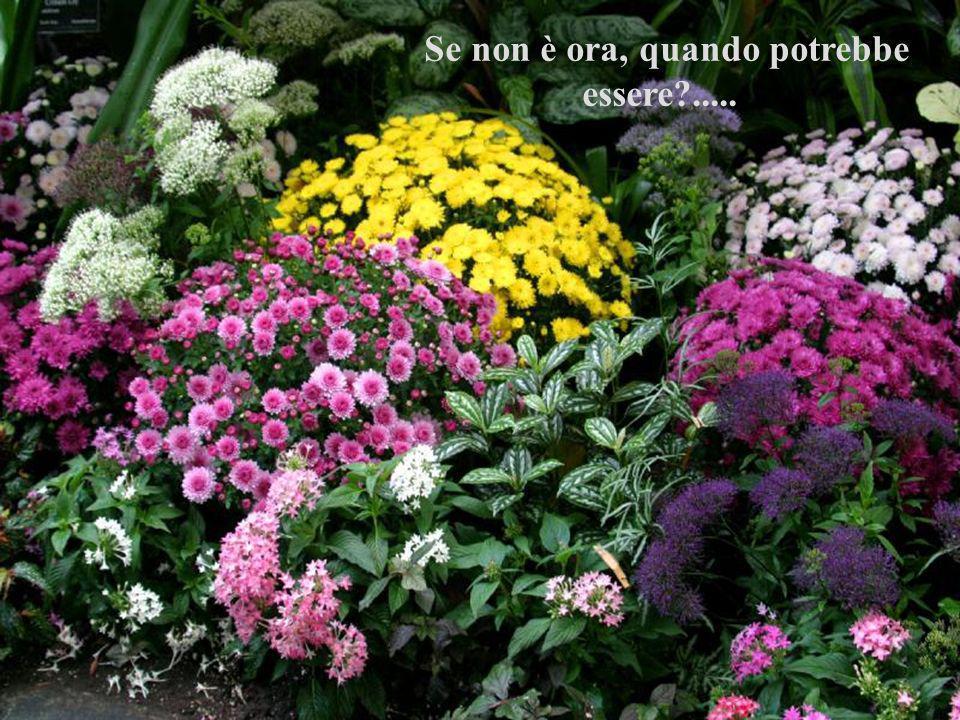 La verità è che non c è momento migliore per essere felici che il momento presente.............