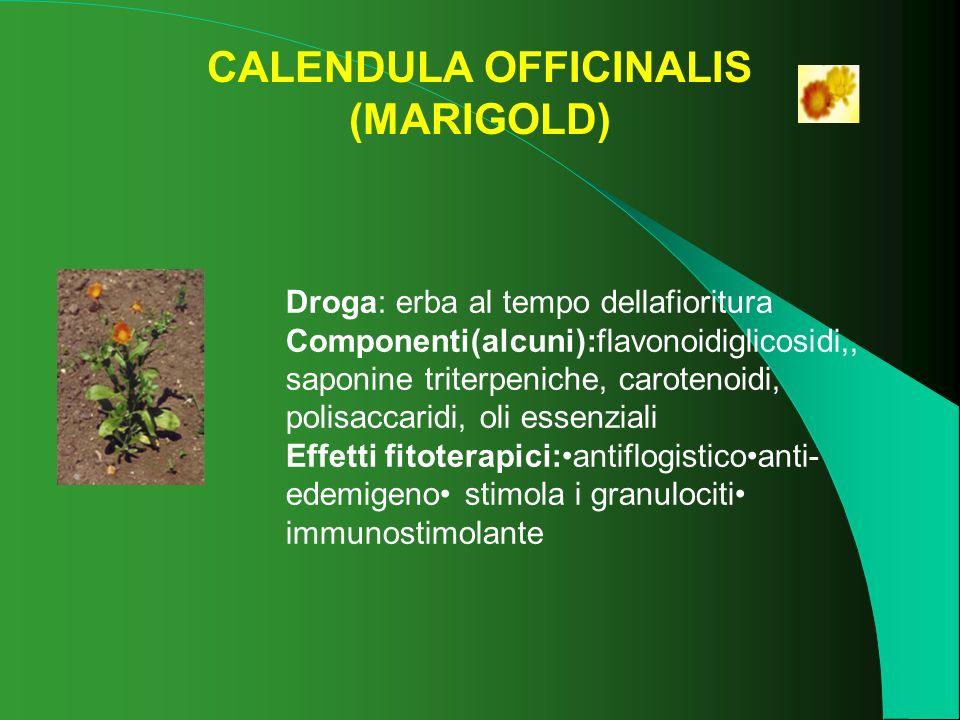 CALENDULA OFFICINALIS (MARIGOLD) Droga: erba al tempo dellafioritura Componenti(alcuni):flavonoidiglicosidi,, saponine triterpeniche, carotenoidi, pol