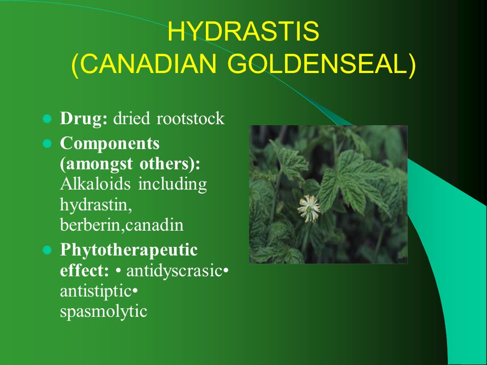 HYDRASTIS (CANADIAN GOLDENSEAL) Drug: dried rootstock Components (amongst others): Alkaloids including hydrastin, berberin,canadin Phytotherapeutic effect: antidyscrasic antistiptic spasmolytic