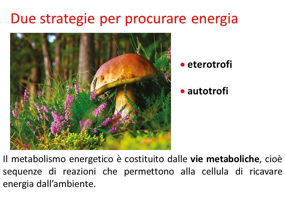 eterotrofi autotrofi Il metabolismo energetico è costituito dalle vie metaboliche, cioè sequenze di reazioni che permettono alla cellula di ricavare e