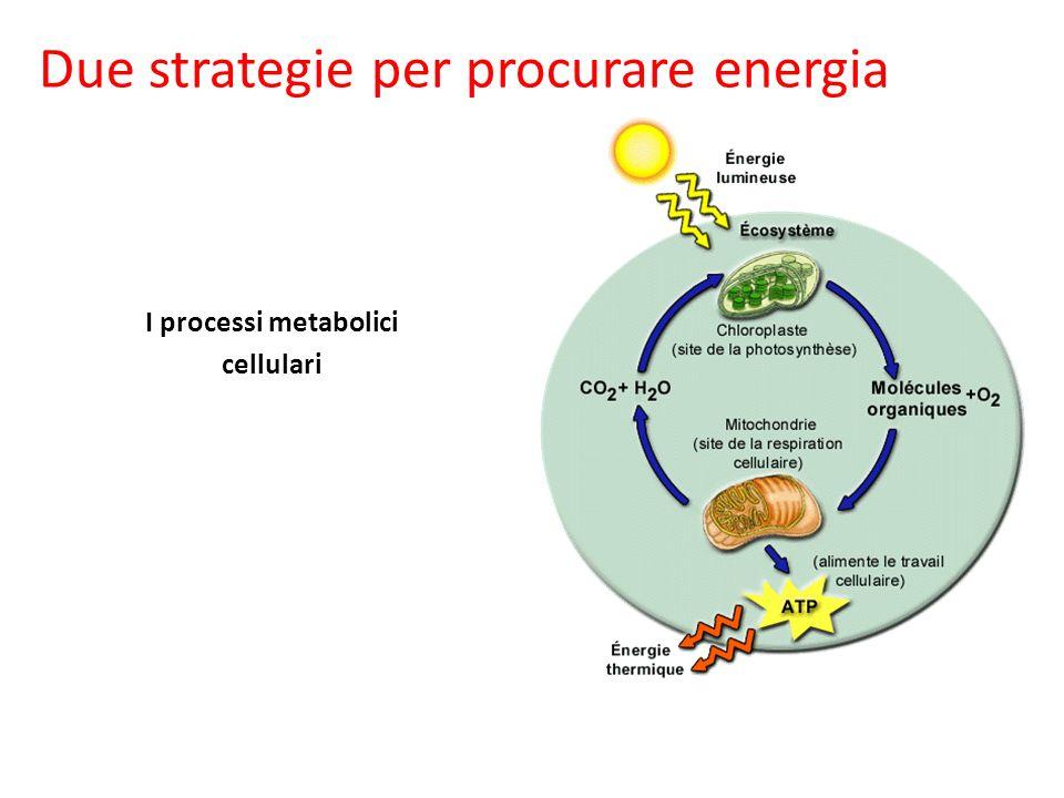 I processi metabolici cellulari