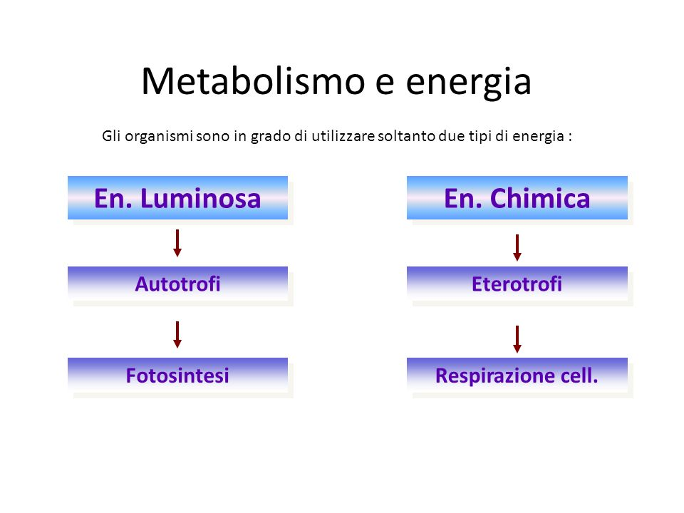 Organismi autotrofi Tutti gli organismi ricavano dallambiente lenergia necessaria per poter svolgere il proprio «lavoro».