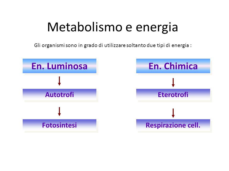 Metabolismo e energia Gli organismi sono in grado di utilizzare soltanto due tipi di energia : En. Luminosa En. Chimica Autotrofi Eterotrofi Fotosinte