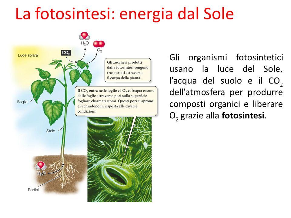 La fotosintesi: energia dal Sole Gli organismi fotosintetici usano la luce del Sole, lacqua del suolo e il CO 2 dellatmosfera per produrre composti or