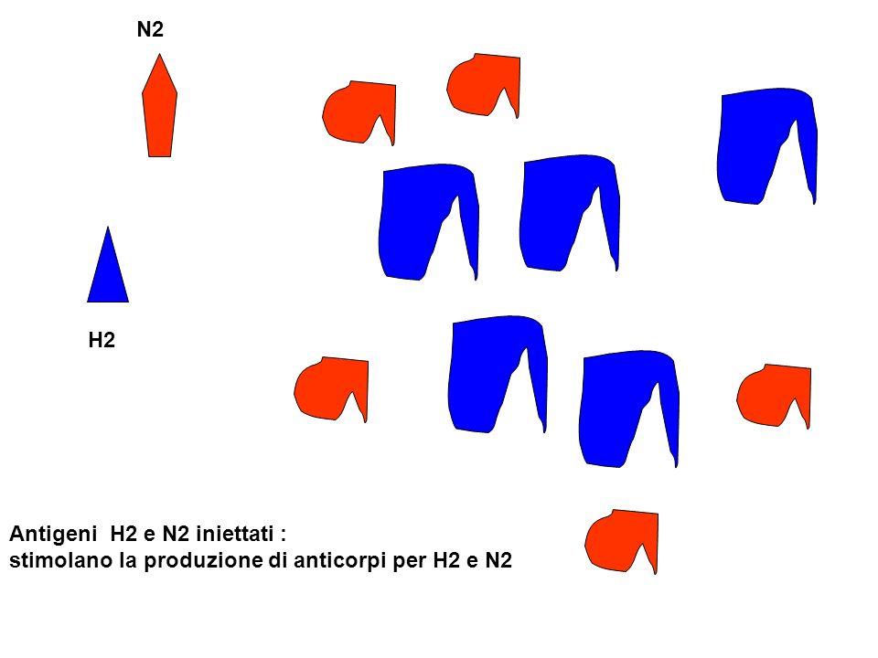 N2 H2 Antigeni H2 e N2 iniettati : stimolano la produzione di anticorpi per H2 e N2