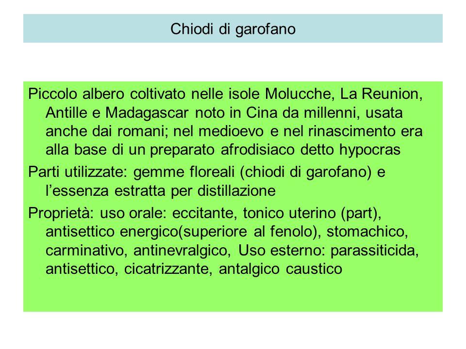 Chiodi di garofano Eugenia aromatica Myrtacea