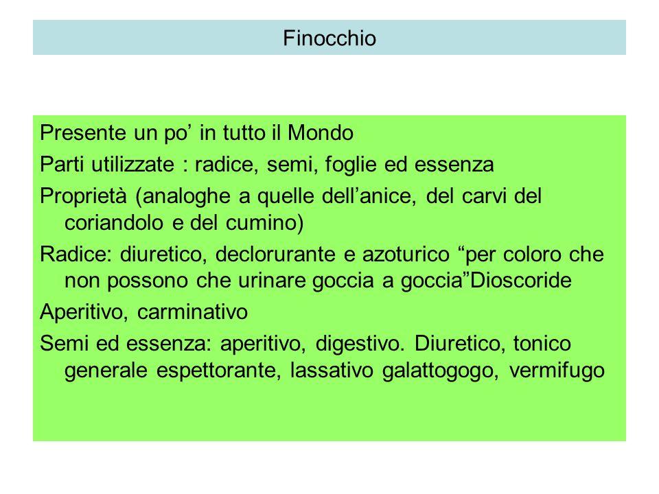 Finocchio Foeniculum vulgare Ombrellifera