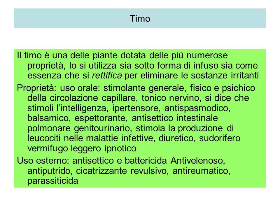 Timo Thymus vulgaris Labiata