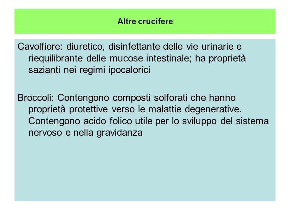 Cavolo Brassica oleracea Crucifere Uso orale: principali indicazioni: Ulcere gastriche Cirrosi e asciti Diabete(metabolismo dei glucidi) coliti ulcero