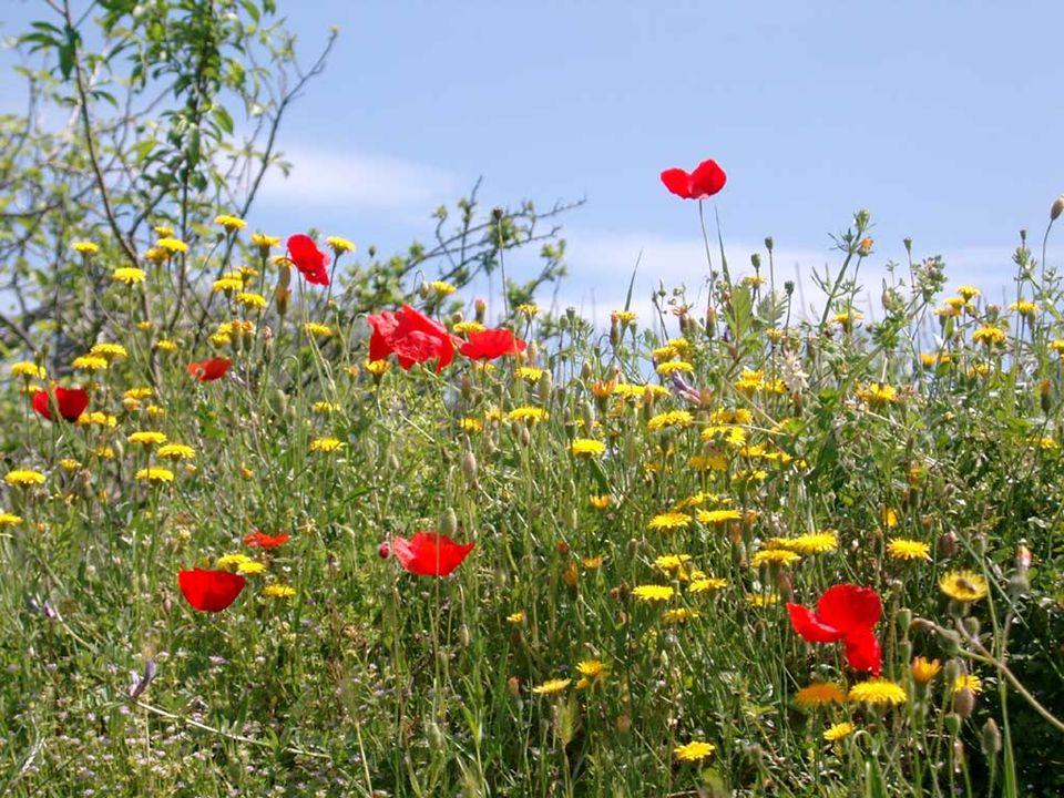 E voglio coglierla, come si colgono i fiori in un mattino di Primavera.