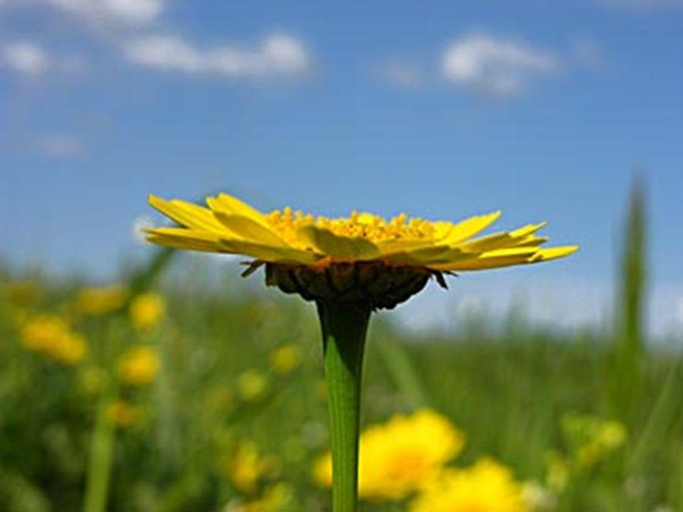 Ma so, mio Signore, che il fiore nasce solo alla fine di un lungo inverno in cui la morte ha infierito.
