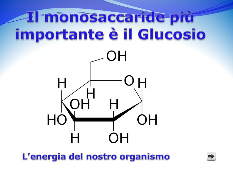 Le funzioni del Glucosio La sua funzione principale è quella di produrre energia nelle cellule tramite la sua ossidazione ( respirazione cellulare) Attraverso la glicolisi una molecola di glucosio viene demolita e il suo prodotto verrà utilizzato per la respirazione cellulare.