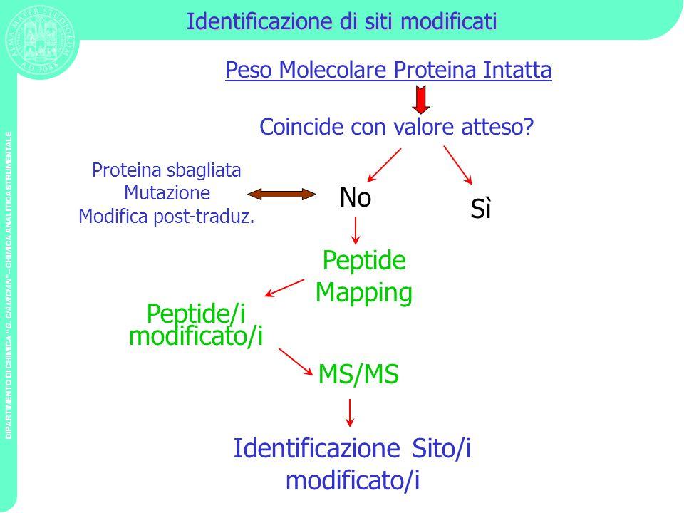 DIPARTIMENTO DI CHIMICA G. CIAMICIAN – CHIMICA ANALITICA STRUMENTALE Identificazione di siti modificati Peso Molecolare Proteina Intatta Peptide/i mod