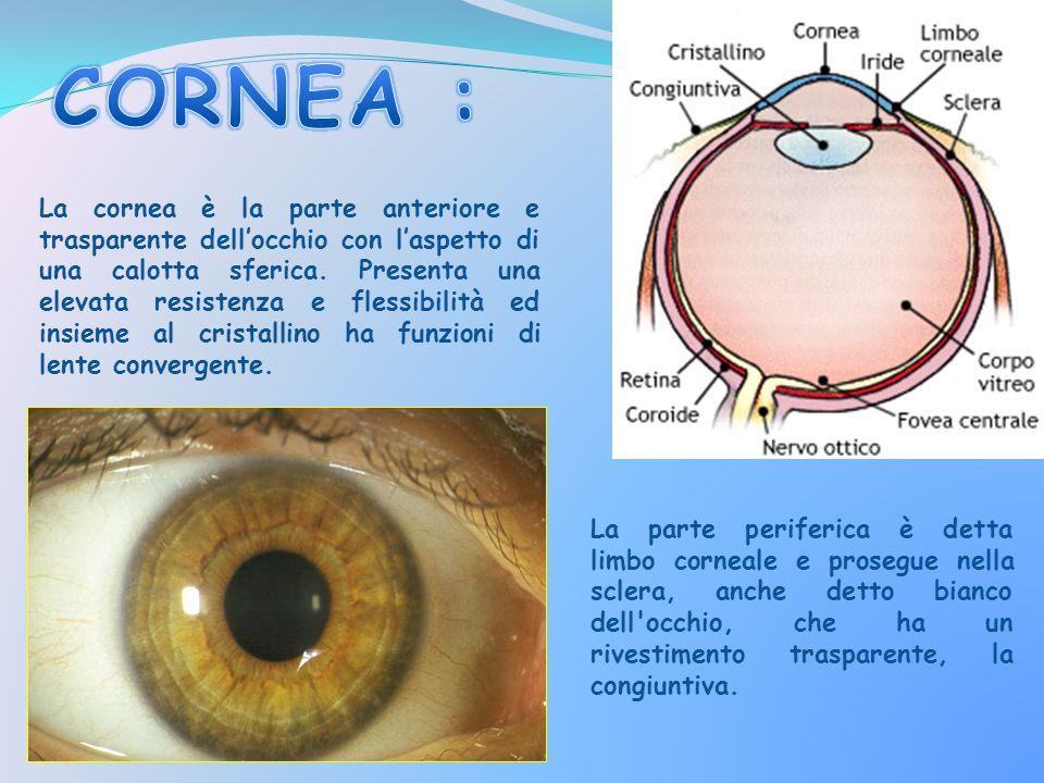 La cornea è la parte anteriore e trasparente dellocchio con laspetto di una calotta sferica. Presenta una elevata resistenza e flessibilità ed insieme