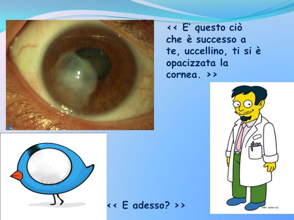 Rigenerazione della cornea : Si esegue un piccolo prelievo superficiale di limbo corneale.