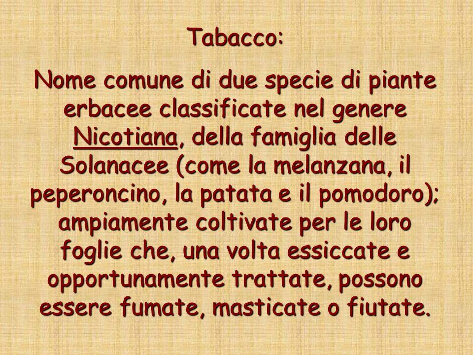 Tabacco: Nome comune di due specie di piante erbacee classificate nel genere Nicotiana, della famiglia delle Solanacee (come la melanzana, il peperonc