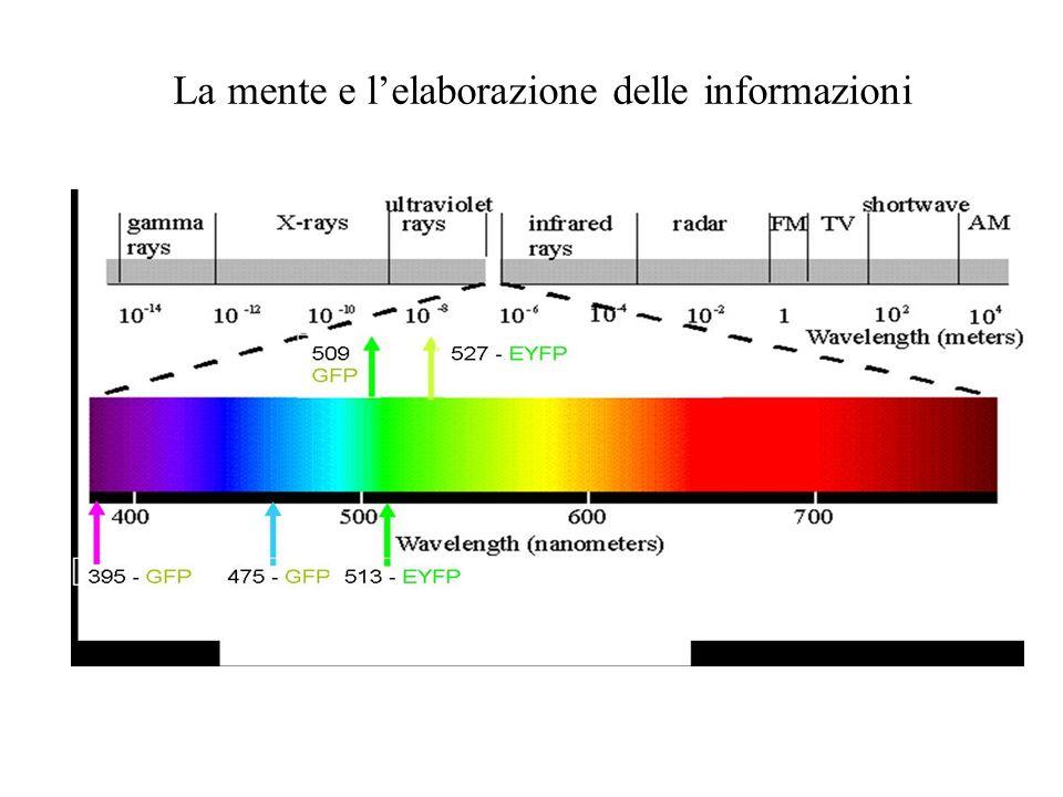 La mente e lelaborazione delle informazioni Segnali fisici Al di sotto di queste frequenze vi sono i raggi ultravioletti, mentre al di sopra vi sono i