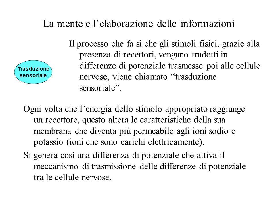 La mente e lelaborazione delle informazioni Il processo che fa sì che gli stimoli fisici, grazie alla presenza di recettori, vengano tradotti in diffe
