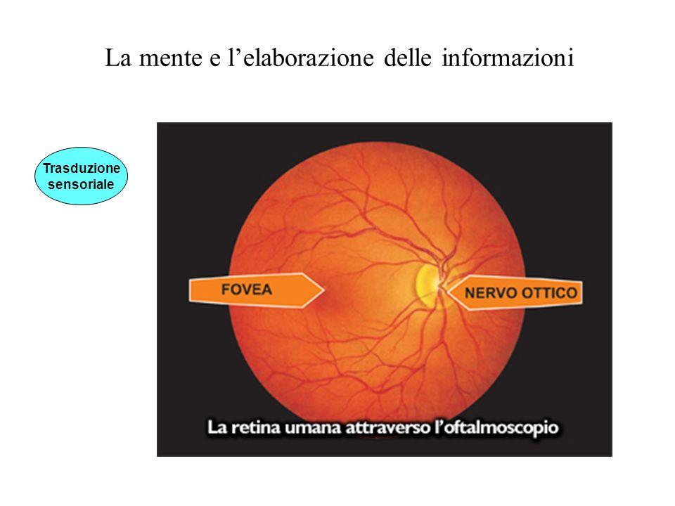 La mente e lelaborazione delle informazioni Trasduzione sensoriale