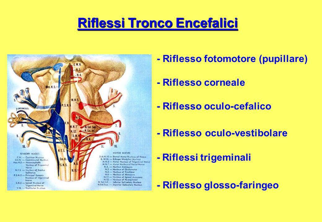 Riflessi Tronco Encefalici - Riflesso fotomotore (pupillare) - Riflesso corneale - Riflesso oculo-cefalico - Riflesso oculo-vestibolare - Riflessi trigeminali - Riflesso glosso-faringeo