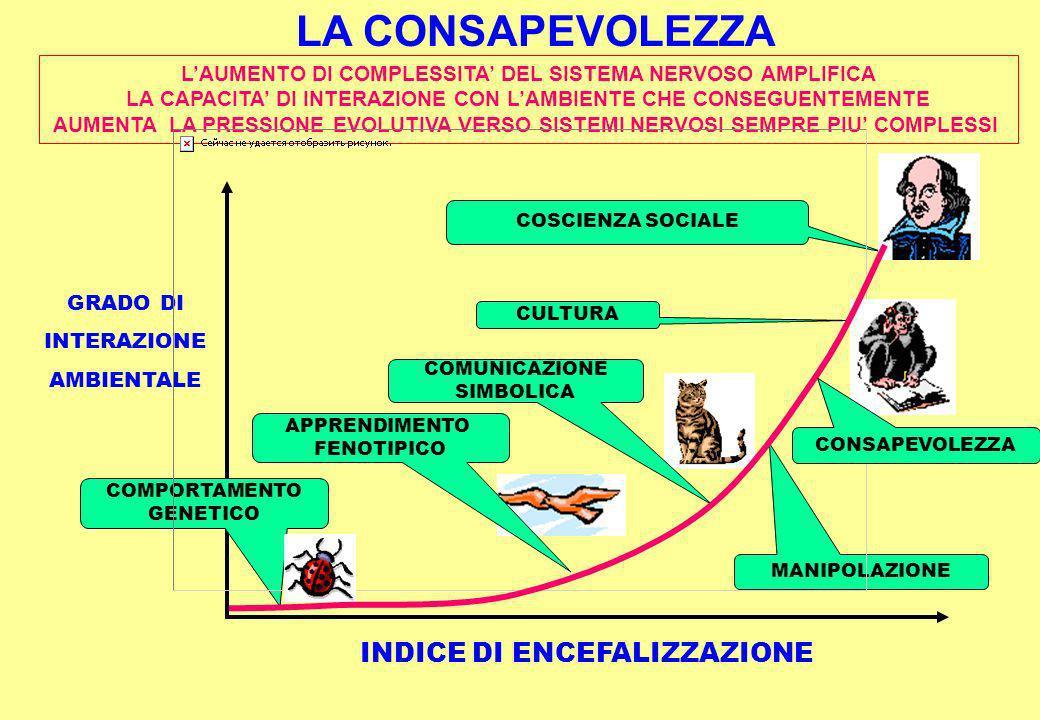INDICE DI ENCEFALIZZAZIONE GRADO DI INTERAZIONE AMBIENTALE COMPORTAMENTO GENETICO APPRENDIMENTO FENOTIPICO CULTURA COSCIENZA SOCIALE LAUMENTO DI COMPLESSITA DEL SISTEMA NERVOSO AMPLIFICA LA CAPACITA DI INTERAZIONE CON LAMBIENTE CHE CONSEGUENTEMENTE AUMENTA LA PRESSIONE EVOLUTIVA VERSO SISTEMI NERVOSI SEMPRE PIU COMPLESSI MANIPOLAZIONE COMUNICAZIONE SIMBOLICA CONSAPEVOLEZZA LA CONSAPEVOLEZZA