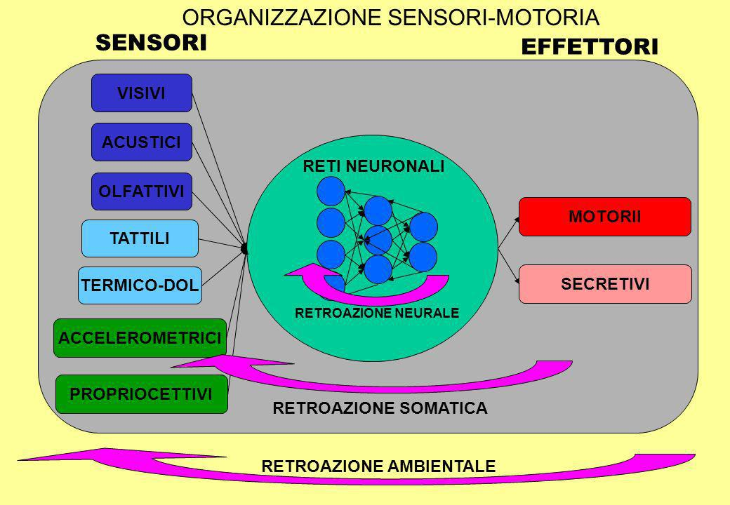 ORGANIZZAZIONE SENSORI-MOTORIA TATTILI TERMICO-DOL OLFATTIVI ACCELEROMETRICI VISIVI ACUSTICI PROPRIOCETTIVI SECRETIVI MOTORII SENSORI EFFETTORI RETI NEURONALI RETROAZIONE AMBIENTALE RETROAZIONE NEURALE RETROAZIONE SOMATICA