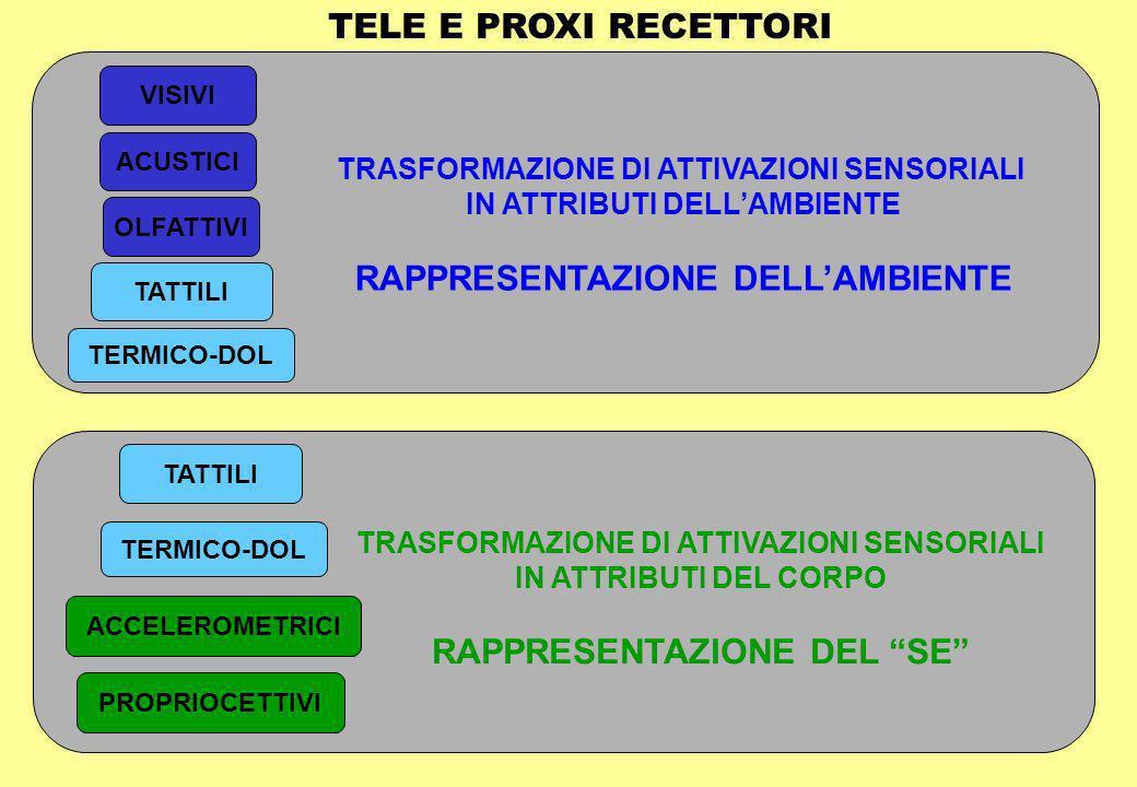 TALAMO NUCLEI BASALI CERVELLETTO (AZIONI RIFLESSE) COORD.SENSORI-MOTORIO CORTECCIA ASSOCIATIVA (COORDINAMENTO MULTI-SENSORIALE PLASTICO) TRONCOENCEFALO E MIDOLLO Riflessi metamerici CORTECCIA FRONTALE (AZIONI VOLONTARIE E DIFFERITE CONSAPEVOLEZZA)