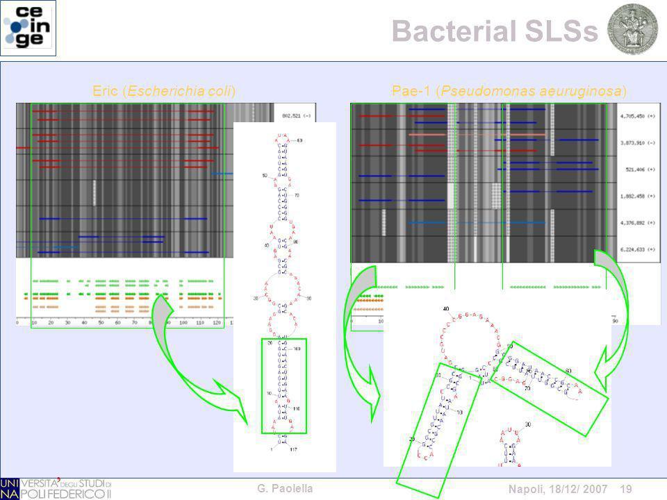 G. Paolella Napoli, 18/12/ 2007 19 Bacterial SLSs Pae-1 (Pseudomonas aeuruginosa)Eric (Escherichia coli)