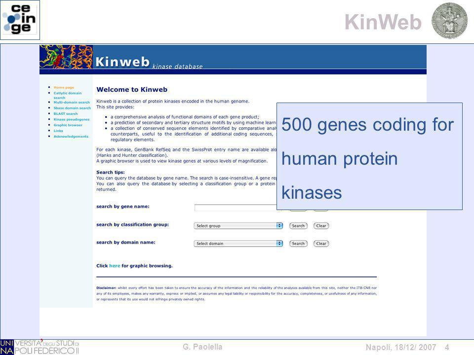 G. Paolella Napoli, 18/12/ 2007 4 KinWeb 500 genes coding for human protein kinases