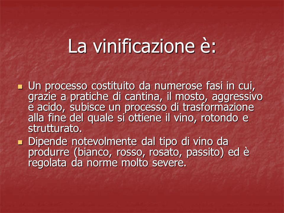 La vinificazione è: Un processo costituito da numerose fasi in cui, grazie a pratiche di cantina, il mosto, aggressivo e acido, subisce un processo di