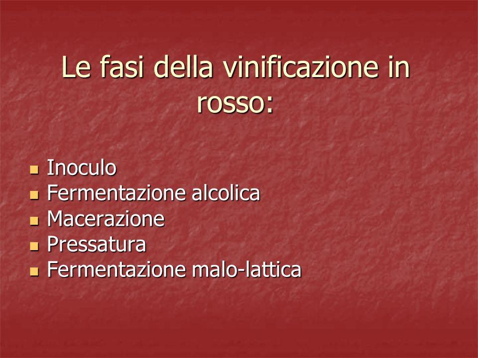 Le fasi della vinificazione in rosso: Inoculo Inoculo Fermentazione alcolica Fermentazione alcolica Macerazione Macerazione Pressatura Pressatura Ferm