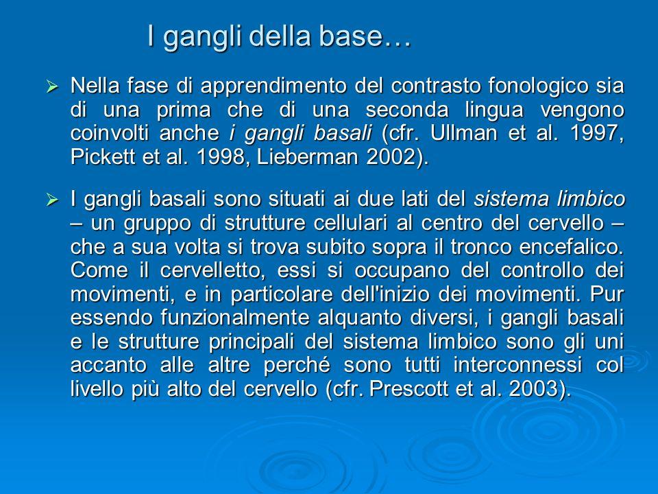 I gangli della base… Nella fase di apprendimento del contrasto fonologico sia di una prima che di una seconda lingua vengono coinvolti anche i gangli