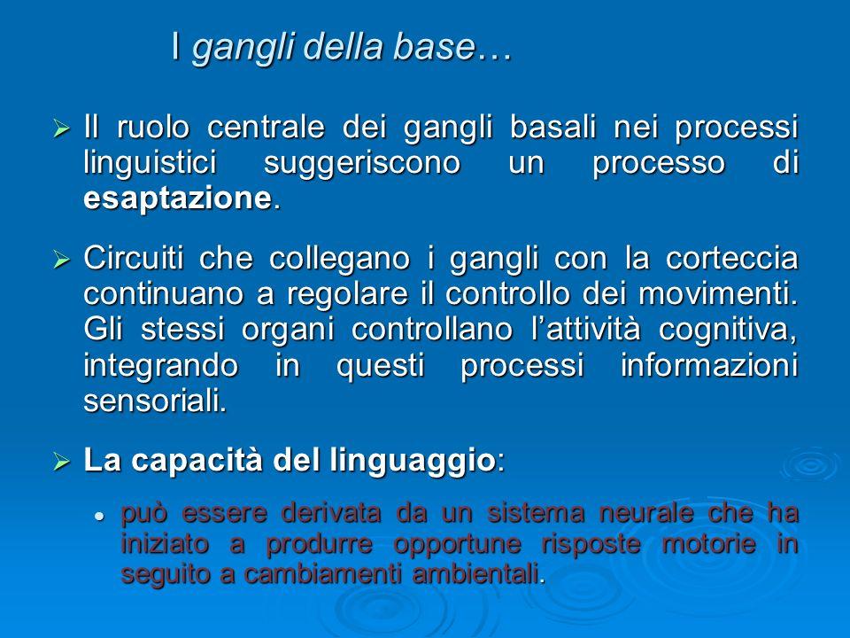 I gangli della base… Il ruolo centrale dei gangli basali nei processi linguistici suggeriscono un processo di esaptazione. Il ruolo centrale dei gangl
