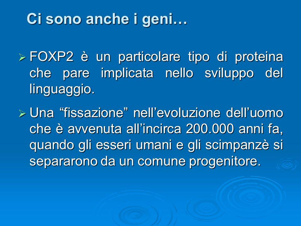 Ci sono anche i geni… FOXP2 è un particolare tipo di proteina che pare implicata nello sviluppo del linguaggio. FOXP2 è un particolare tipo di protein