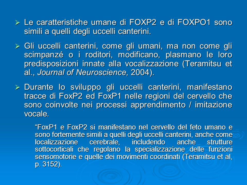 Le caratteristiche umane di FOXP2 e di FOXPO1 sono simili a quelli degli uccelli canterini. Le caratteristiche umane di FOXP2 e di FOXPO1 sono simili