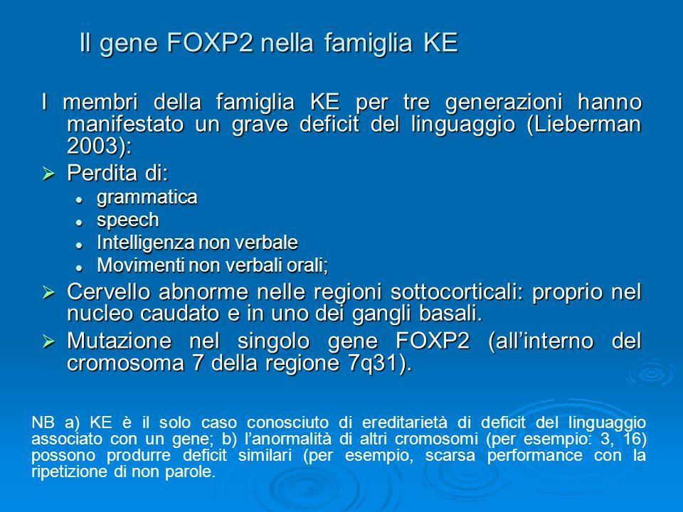 Il gene FOXP2 nella famiglia KE I membri della famiglia KE per tre generazioni hanno manifestato un grave deficit del linguaggio (Lieberman 2003): Per