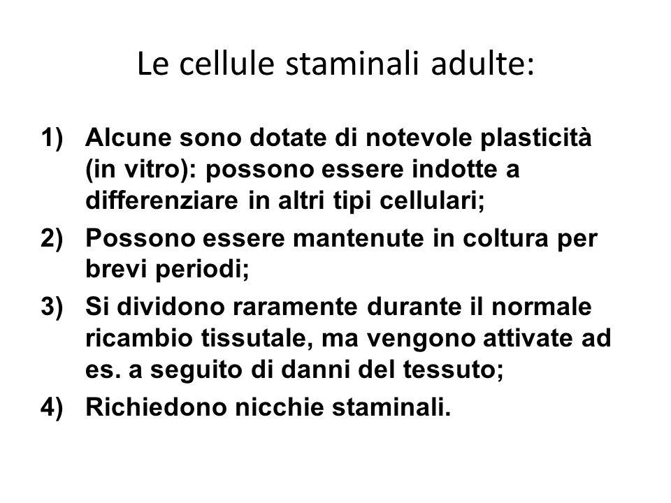 Le cellule staminali adulte: 1)Alcune sono dotate di notevole plasticità (in vitro): possono essere indotte a differenziare in altri tipi cellulari; 2