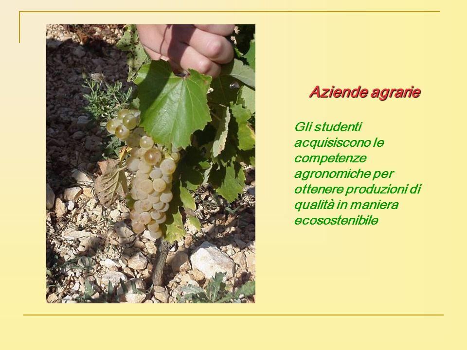 Aziende agrarie Gli studenti acquisiscono le competenze agronomiche per ottenere produzioni di qualità in maniera ecosostenibile