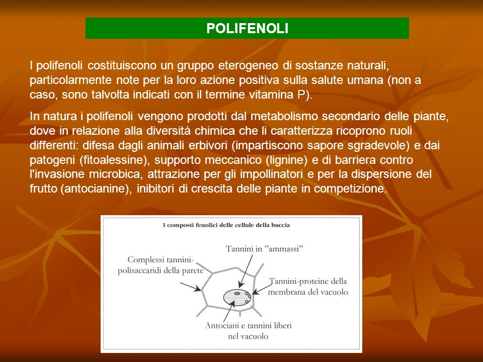 I polifenoli costituiscono un gruppo eterogeneo di sostanze naturali, particolarmente note per la loro azione positiva sulla salute umana (non a caso,
