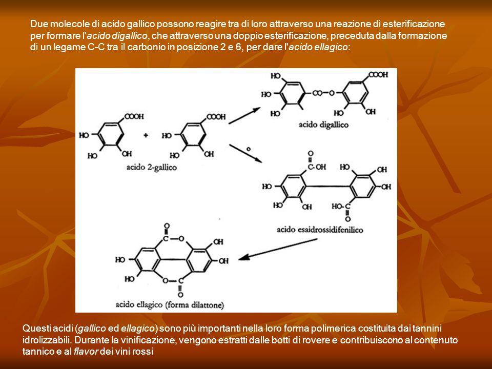 Due molecole di acido gallico possono reagire tra di loro attraverso una reazione di esterificazione per formare l'acido digallico, che attraverso una