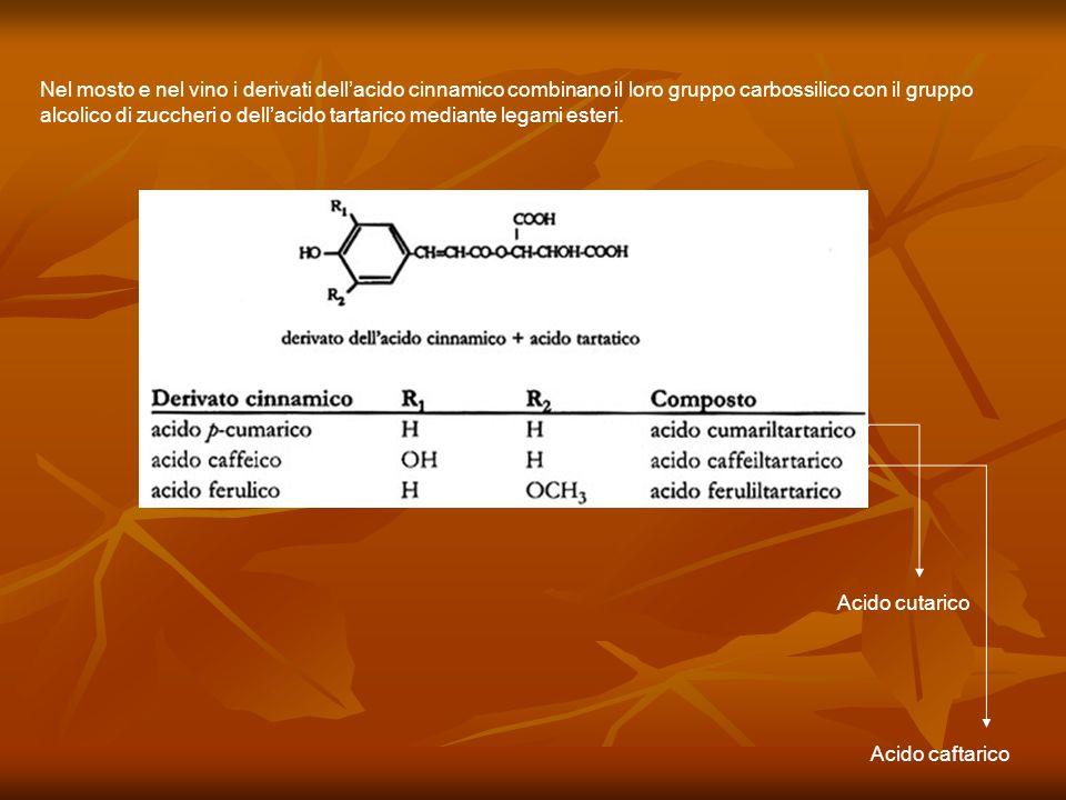 Nel mosto e nel vino i derivati dellacido cinnamico combinano il loro gruppo carbossilico con il gruppo alcolico di zuccheri o dellacido tartarico med
